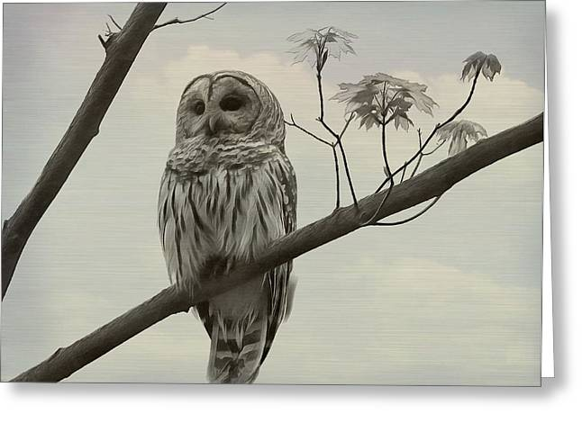 Bird On Tree Mixed Media Greeting Cards - Barred Owl On A Tree Greeting Card by Dan Sproul