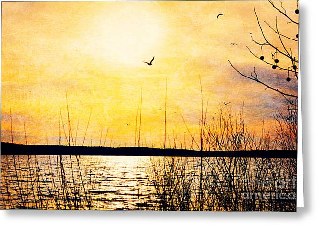 Enhanced Greeting Cards - Barren Greeting Card by Kelly Nowak