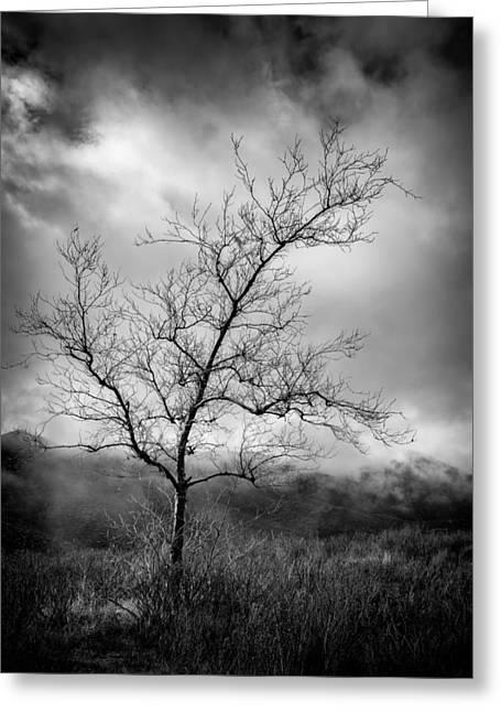 Barren Tree 1 Greeting Card by Joseph Smith