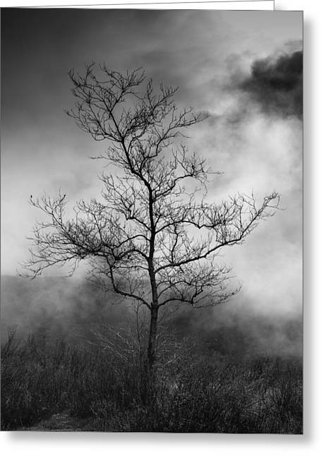Barren Tree 2 Greeting Card by Joseph Smith