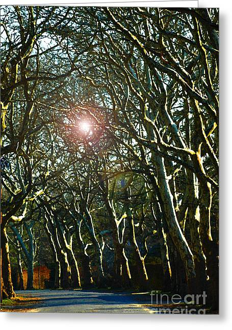 Tree Lines Mixed Media Greeting Cards - Barren Trees in Sunlight Greeting Card by ArtyZen Studios - ArtyZen Home