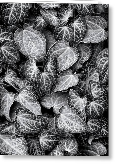 Barrenwort Leaves Greeting Card by Tim Gainey