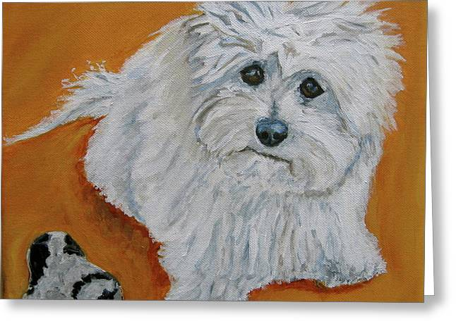 Toy Maltese Paintings Greeting Cards - Barry and the Leopard Bone Greeting Card by Kellie Straw