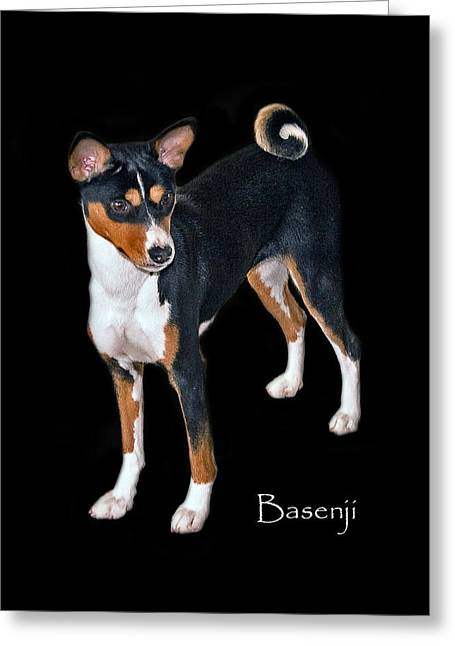 Basenji Greeting Card by Larry Linton