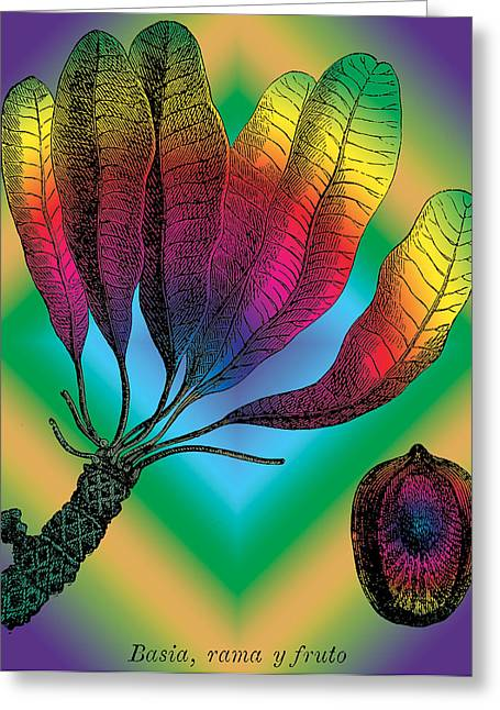 Basia Plant Greeting Card by Eric Edelman