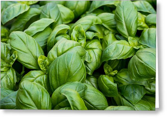 Biology Greeting Cards - Basil Bunch Greeting Card by Justin Woodhouse
