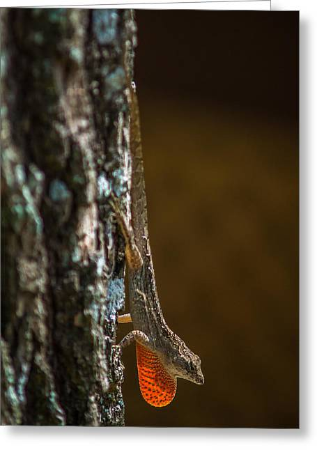 Lizard Head Greeting Cards - Basking Anole Greeting Card by Chris Bordeleau