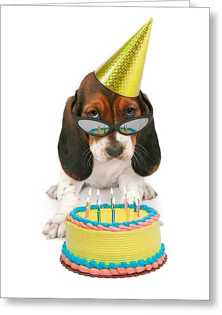 Party Hat Greeting Cards - Basset Hound Puppy Wearing Sunglasses  Greeting Card by Susan  Schmitz