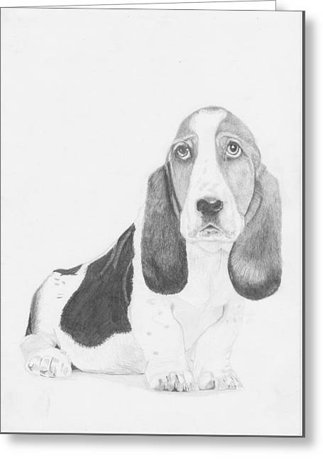 Puppies Drawings Greeting Cards - Bassett Hound Puppy Greeting Card by David Smith