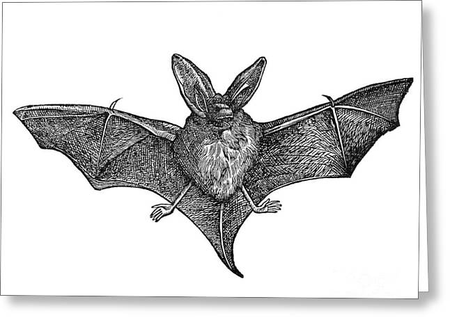 1555 Greeting Cards - Bat, 1555 Greeting Card by Middle Temple Library