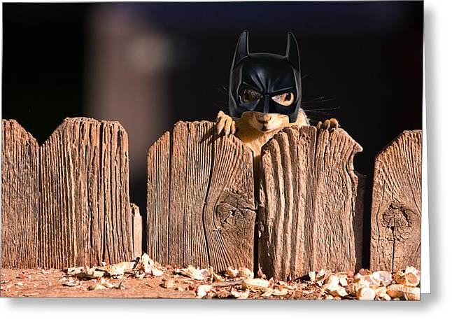 Fox Squirrel Greeting Cards - Bat Squirrel  the Cape Crusader known for putting away nuts.  Greeting Card by James BO  Insogna