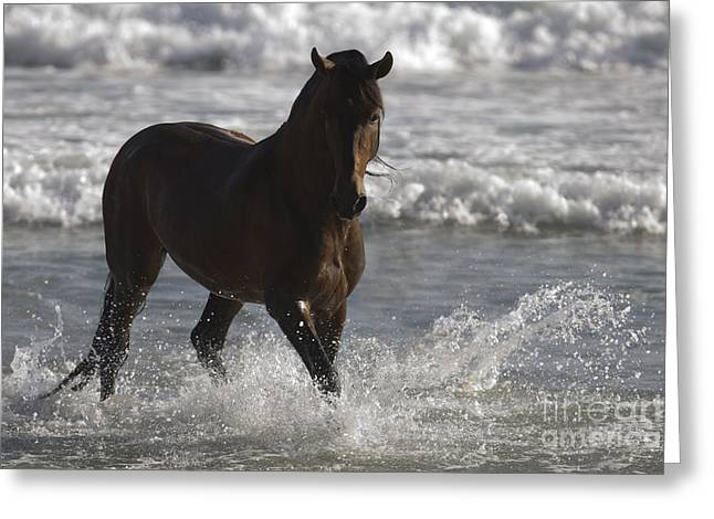 Bay Andalusian Stallion In The Surf Greeting Card by Carol Walker