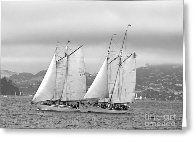 Best Sailing Photos Greeting Cards - Bay Classics Greeting Card by Scott Cameron
