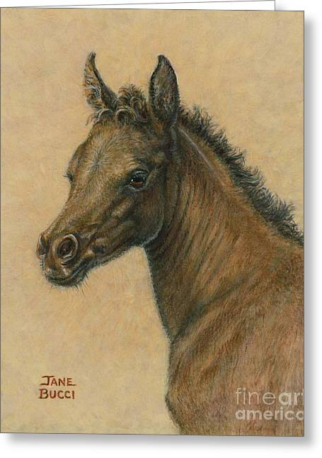 Jane Bucci Greeting Cards - Bay Colt Greeting Card by Jane Bucci