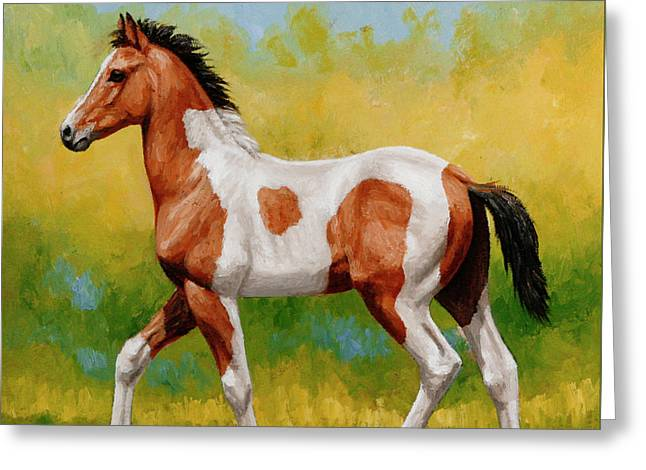 Trot Greeting Cards - Bay Pinto Foal Greeting Card by Crista Forest