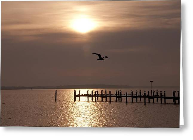 Seagull Reflection Greeting Cards - Bay Sunrise Greeting Card by Bill Cannon