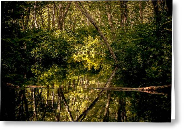 Reflection In Water Greeting Cards - Bayou mirror Greeting Card by Gene Camarco