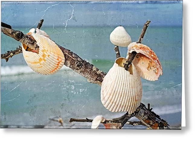 Beach Art - Seashell Shrine - Sharon Cummings Greeting Card by Sharon Cummings