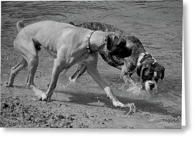 Brindle Greeting Cards - Beach Buddies Greeting Card by DigiArt Diaries by Vicky B Fuller