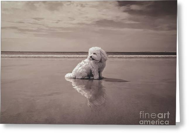 Dogs Digital Greeting Cards - Beach Bum Greeting Card by Charlie Cliques