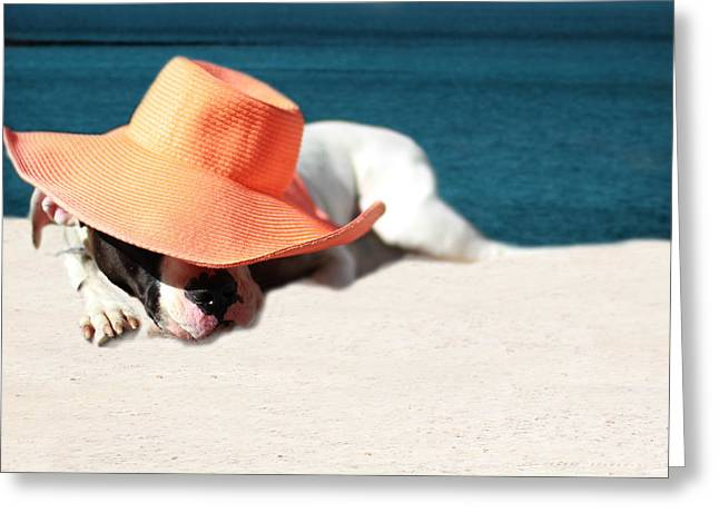 Puppies Photographs Greeting Cards - Beach Day for Bubba Greeting Card by Shelley Neff