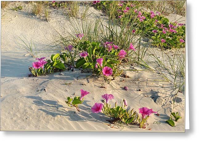 Sand Art Greeting Cards - Beach Decor Greeting Card by Gordon Beck
