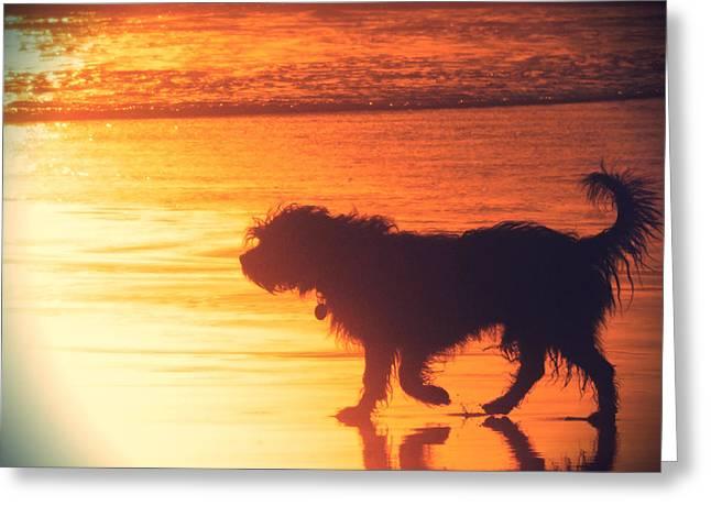 Dog Photographs Greeting Cards - Beach Dog Greeting Card by Paul Topp