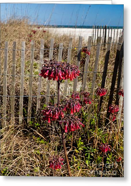 Blue Sky And Sand Greeting Cards - Beach Fence and Red Flowers Greeting Card by Michelle Wiarda