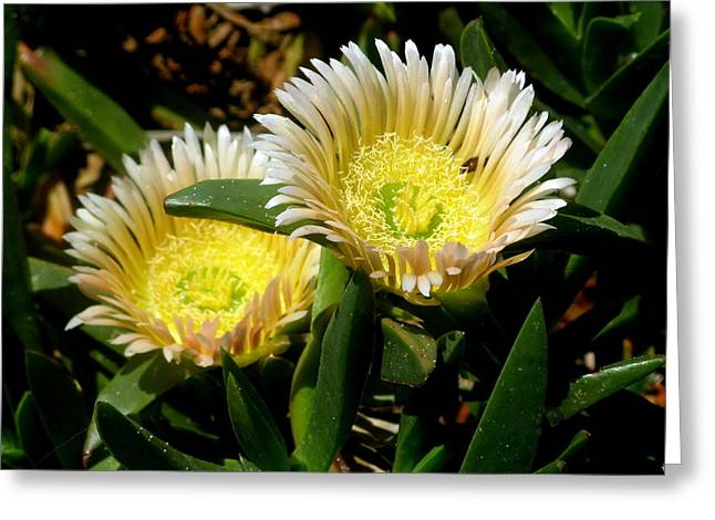 Beach Flower Greeting Card by Joyce Woodhouse