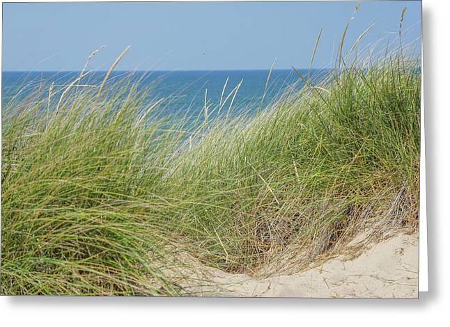 Beach Grass Greeting Card by Art Spectrum