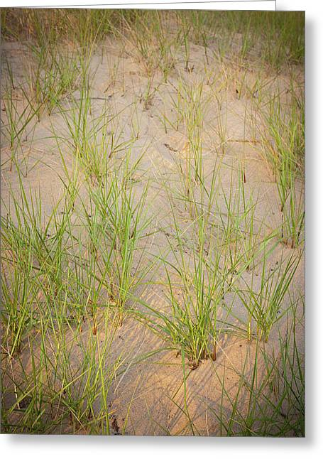Beach Grasses Number 10 Greeting Card by Steve Gadomski