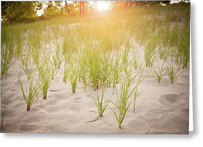 Beach Grasses Number 3 Greeting Card by Steve Gadomski