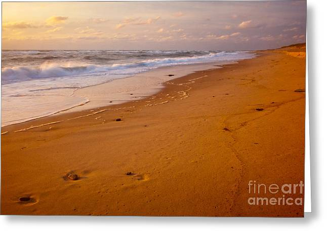 Wild And Scenic Greeting Cards - Beach Impressions Greeting Card by Susan Cole Kelly
