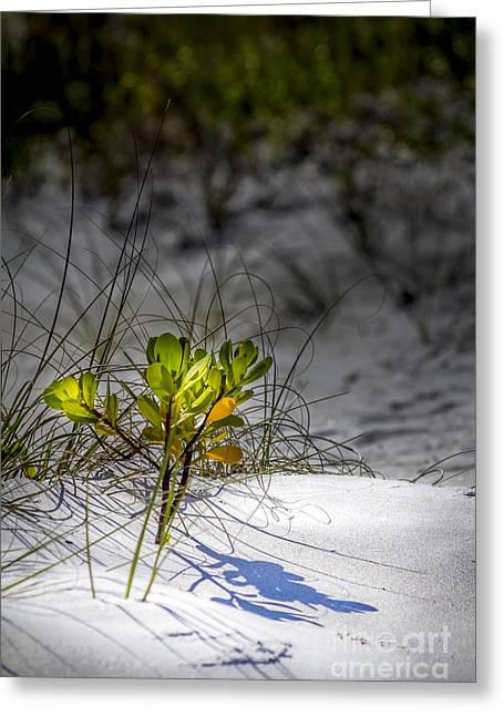 Spring Scenes Greeting Cards - Beach Life Greeting Card by Marvin Spates