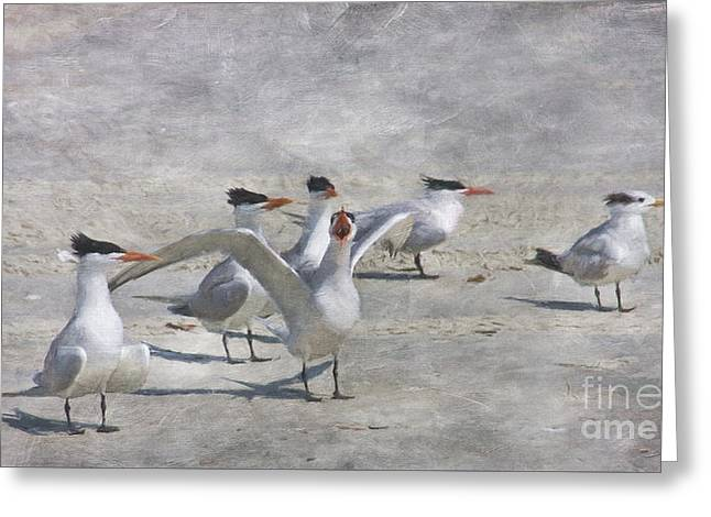 Tern Greeting Cards - Beach Party Greeting Card by Jayne Carney