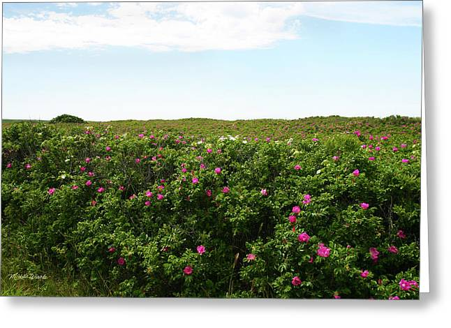 Beach Roses Greeting Cards - Beach Roses to Infinity Marthas Vineyard Massachusetts Greeting Card by Michelle Wiarda