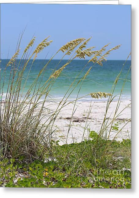 Blue Grapes Greeting Cards - Beach through Sea Oats Greeting Card by Carol Groenen