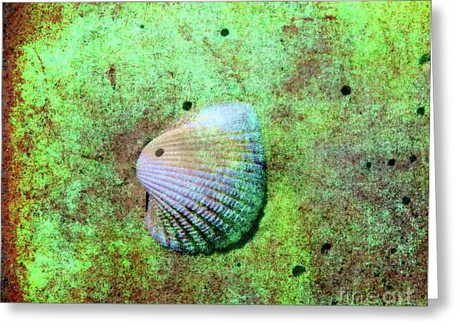 Beach Treasure Greeting Card by Susanne Van Hulst