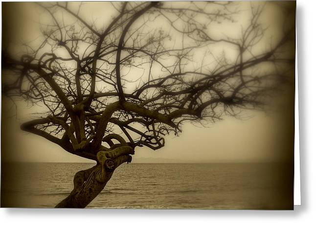Beach Tree Greeting Card by Perry Webster