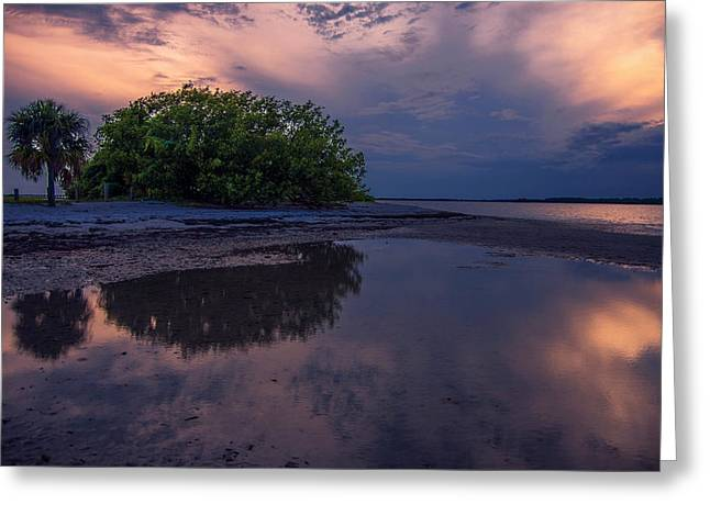 Beach Trees Greeting Card by Michael Frizzell