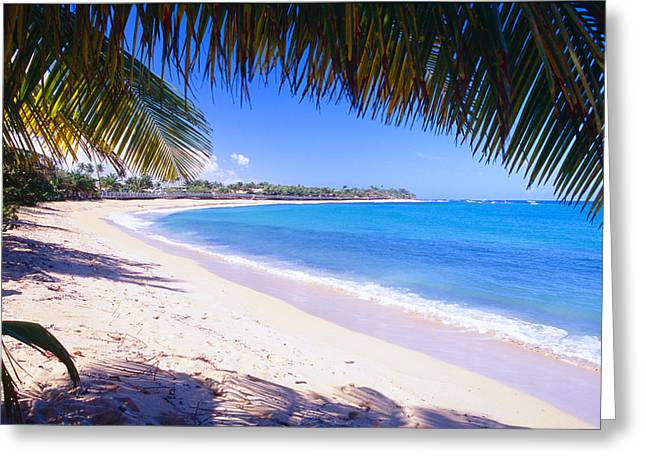 Beach View Under A Palm Tree Greeting Card by George Oze