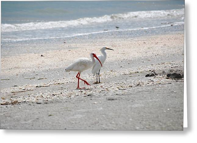 Florida Wildlife Greeting Cards - Beachcombers Greeting Card by Peter  McIntosh