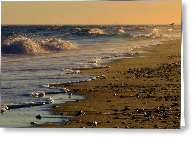 Cold Storage Beach Greeting Cards - Beachcomber  Greeting Card by Dianne Cowen