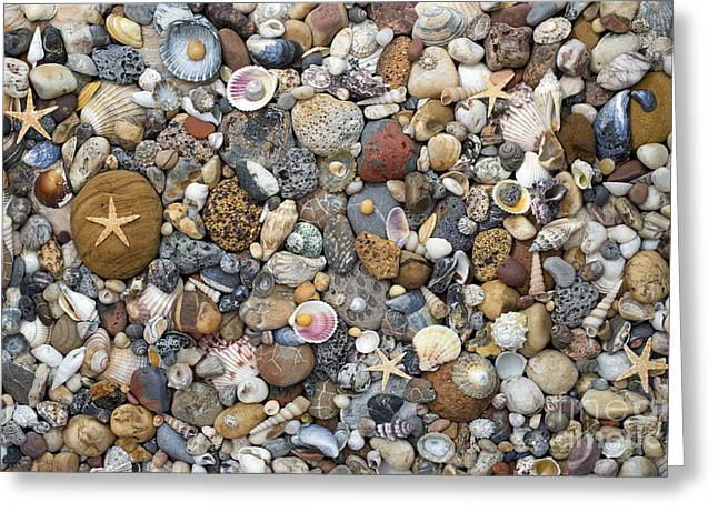 Treasures Greeting Cards - Beachcombing Pattern Greeting Card by Tim Gainey