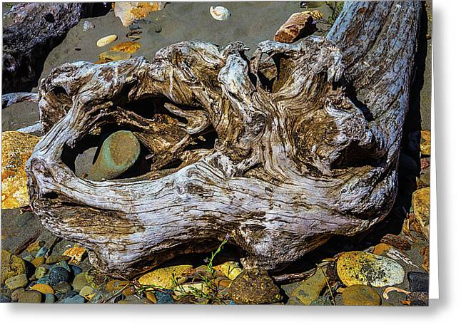 Beached Driftwood Greeting Card by Garry Gay
