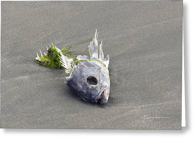 Ocean Shore Greeting Cards - Beached Head Greeting Card by Catherine Pearson
