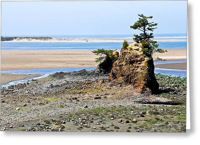 Kite Greeting Cards - Beached Tree At The Oregon Coast Greeting Card by Athena Mckinzie