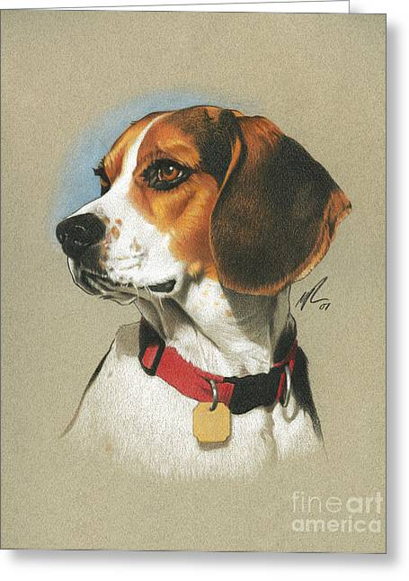Drawing Color Pencils Drawings Greeting Cards - Beagle Greeting Card by Marshall Robinson