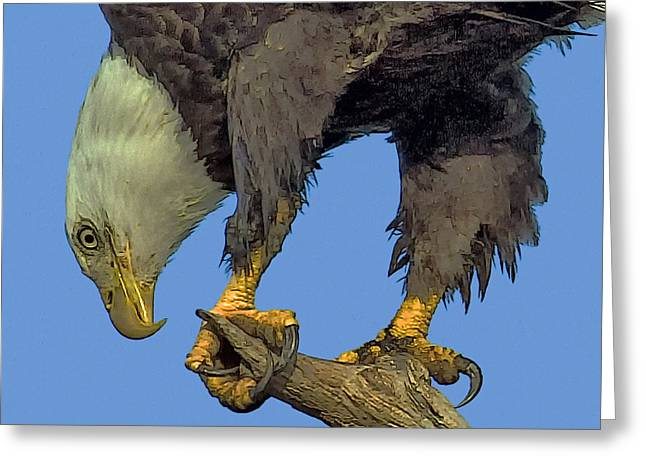 Narure Greeting Cards - Beak And Talons Greeting Card by Larry Linton
