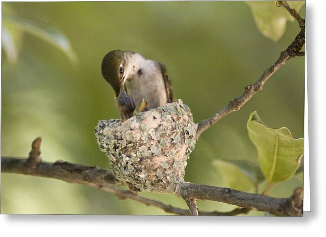 Feeding Birds Greeting Cards - Beak to Beak Greeting Card by Don Wolf